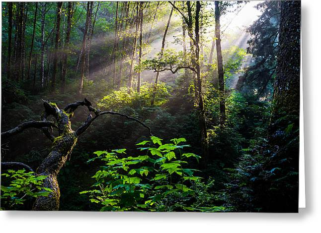 Rainforest Greeting Cards - Sacred Light Greeting Card by Chad Dutson