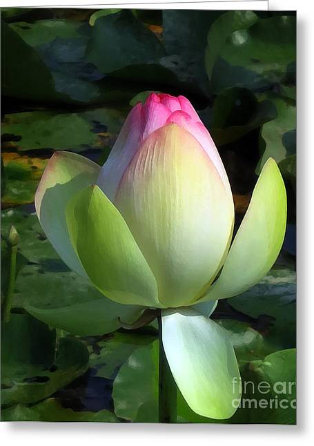 Sacred Tulip Lotus Greeting Card by Patricia Januszkiewicz