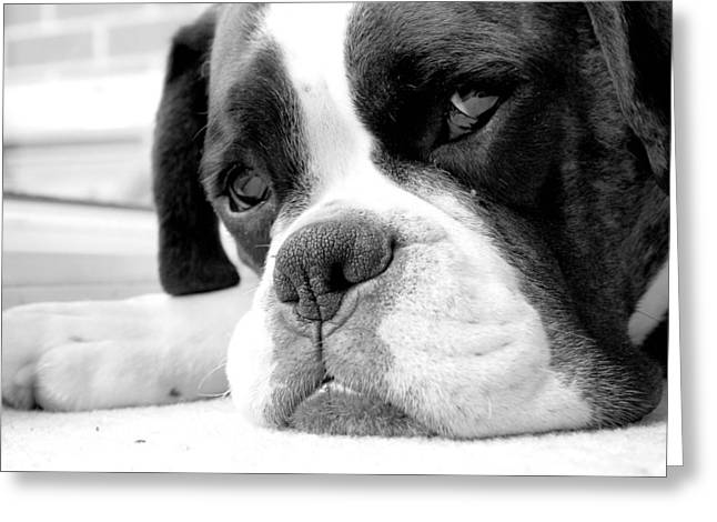 Mike Taylor Greeting Cards - Sad Boxer Dog Greeting Card by Mike Taylor