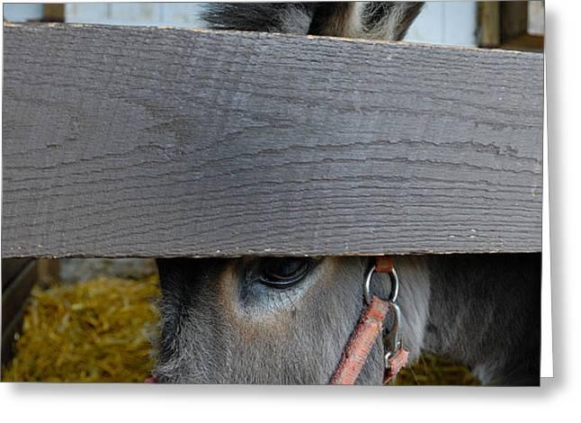 Sad Donkey Greeting Card by Amy Cicconi