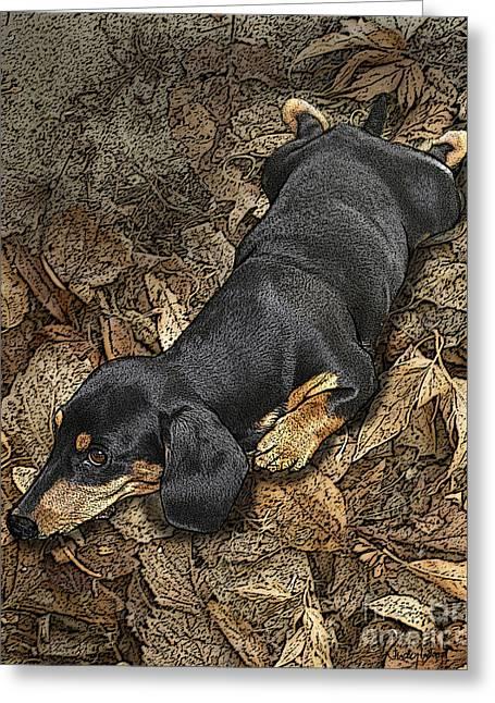 Dachshund Puppy Digital Art Greeting Cards - Sad Murphy Greeting Card by Judy Wood
