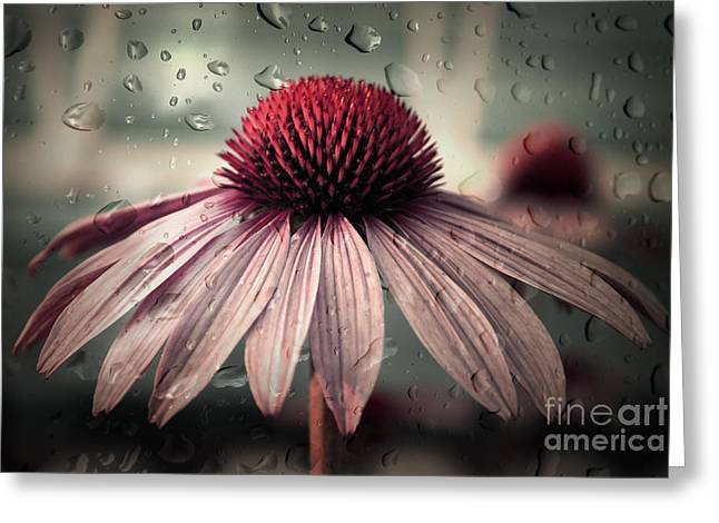 Echinacea Greeting Cards - Sad Solitude Greeting Card by Aimelle