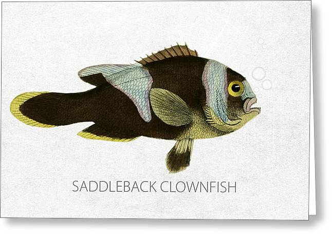 Aquarium Fish Digital Greeting Cards - Saddleback clownfish Greeting Card by Aged Pixel
