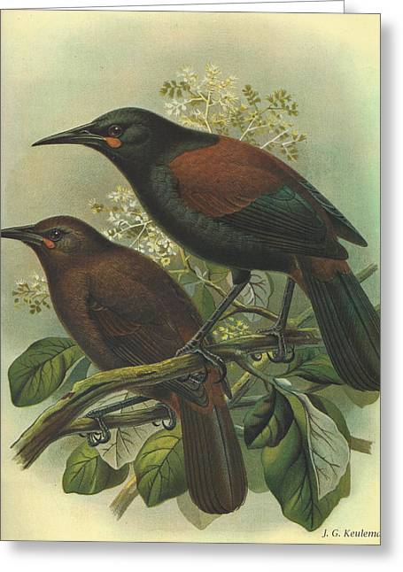 Saddleback Greeting Cards - Saddleback Greeting Card by J G Keulemans