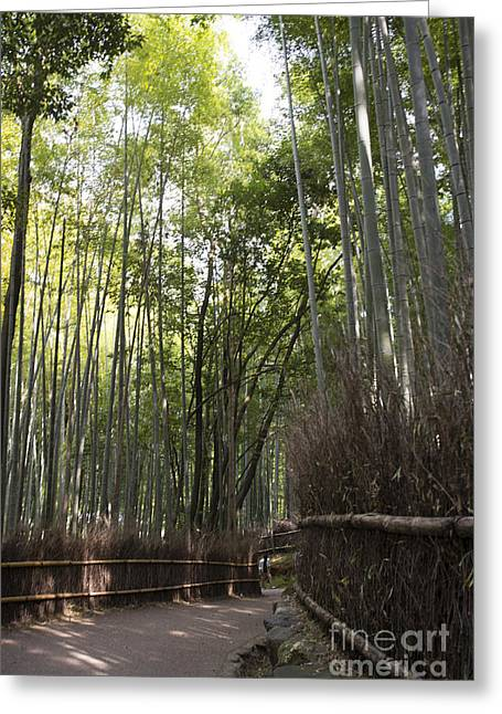 Kyoto Greeting Cards - Sagano -- Bamboo Forest of Arashiyama Greeting Card by David Bearden