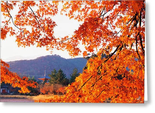 Kyoto Greeting Cards - Sagano Daikaku-ji Ousawa-no-ike Kyoto Greeting Card by Panoramic Images