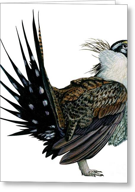 White Background Drawings Greeting Cards - Sage grouse  Greeting Card by Anonymous