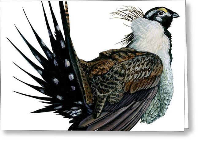Sage grouse  Greeting Card by Anonymous