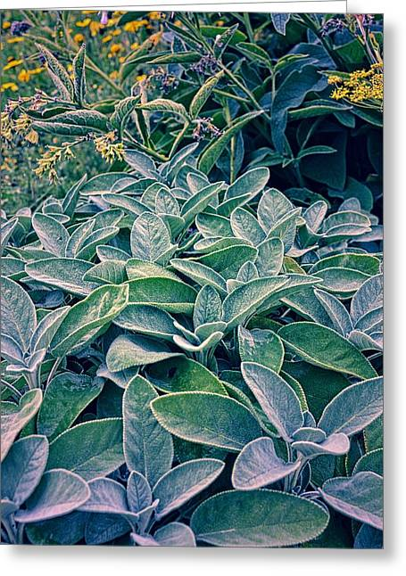Sage Brush Greeting Cards - Sage in the Garden Greeting Card by Michelle Calkins