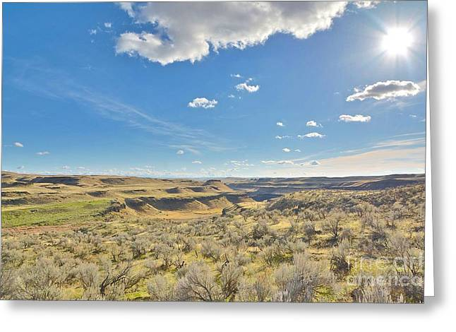 Franklin Farm Greeting Cards - Sagebrush in the Palouse Greeting Card by Rachel Cash