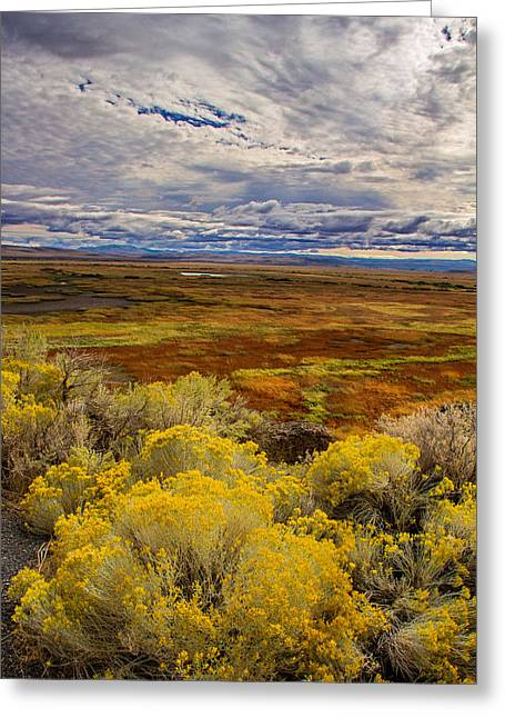 Sagebrush Greeting Cards - Sagebrush sunrise Greeting Card by Kunal Mehra