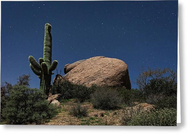 Saguaro Cactus Greeting Cards - Saguaro At Night Greeting Card by Rick Berk