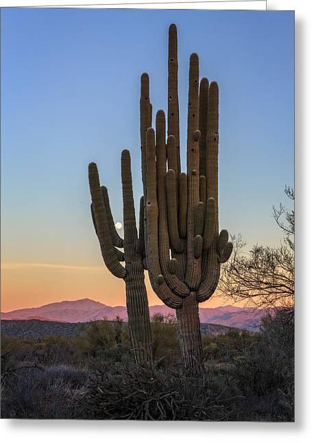 Saguaro Cactus Greeting Cards - Saguaro At Sunset Greeting Card by Rick Berk