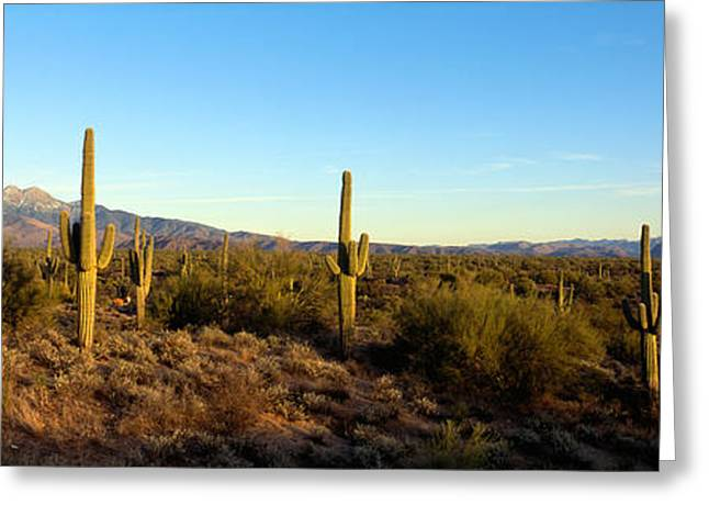Saguaro Cacti In A Desert, Four Peaks Greeting Card by Panoramic Images