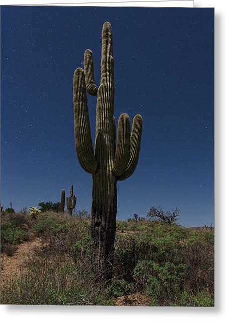 Saguaro Cactus Greeting Cards - Saguaro Cactus Greeting Card by Rick Berk