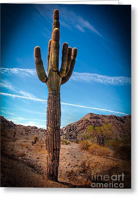 Picturesqueness Greeting Cards - Saguaro Cactus Greeting Card by Robert Bales