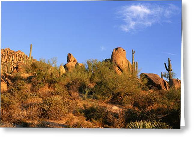 Natural Formations Greeting Cards - Saguaro Cactus, Sonoran Desert Greeting Card by Panoramic Images