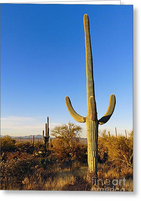 Saguaro Cactus Sunrise At Saguaro National Park Greeting Card by Jamie Pham