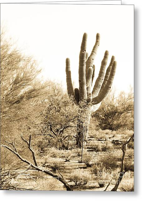 Saguaro Greeting Card by Judi FitzPatrick
