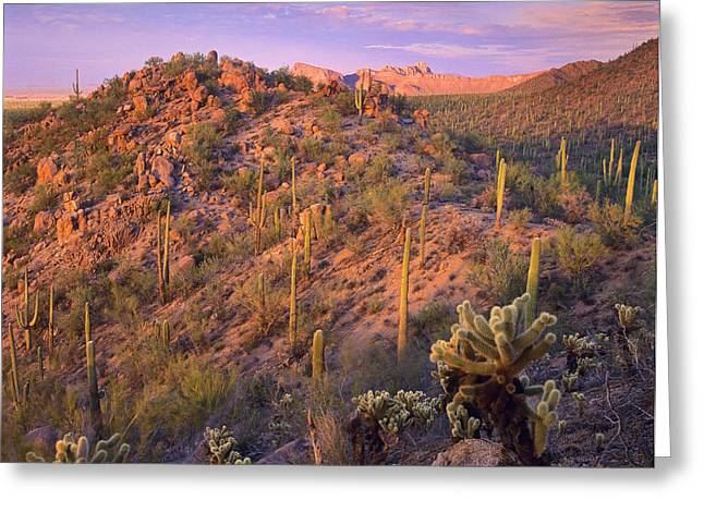 Saguaro National Park Greeting Card by Tim Fitzharris