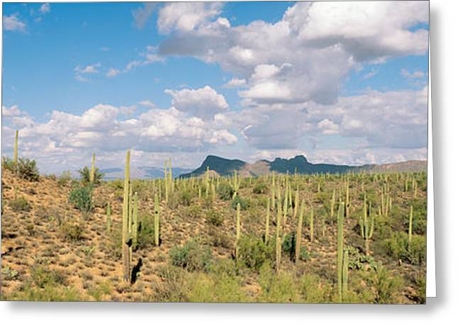 Grey Clouds Greeting Cards - Saguaro National Park Tucson Az Usa Greeting Card by Panoramic Images