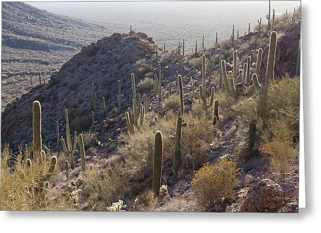 United Staates Greeting Cards - Saguaro Nationalpark Greeting Card by Wolfgang Woerndl