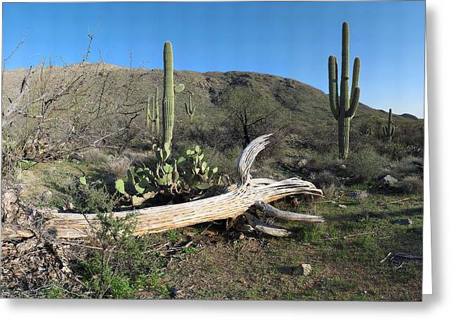 Gigapan Greeting Cards - Saguaro Skeleton Saguaro National Park AZ  Greeting Card by Brian Lockett