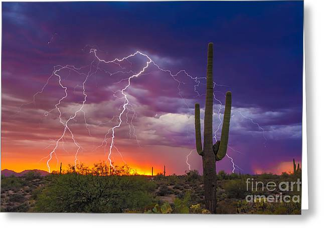 Lightning Photographer Greeting Cards - Saguaro Stormy Sunset II Greeting Card by Nicholas  Pappagallo Jr