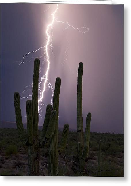 Arizona Lightning Greeting Cards - Saguaro Strike Greeting Card by Cathy Franklin