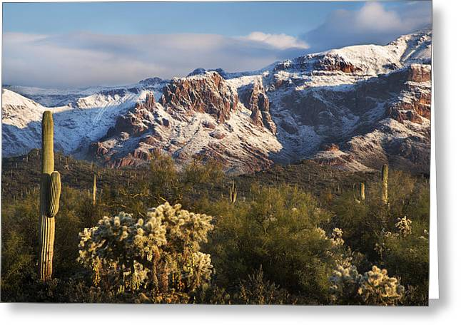 Recently Sold -  - Dave Greeting Cards - Saguaro with snowy Mountains Greeting Card by Dave Dilli