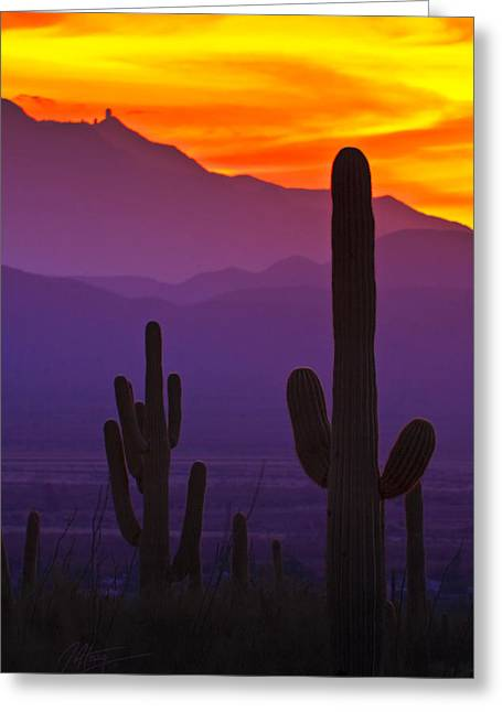 Quinlan Greeting Cards - Saguaros and Kitt Peak Greeting Card by John  Haig
