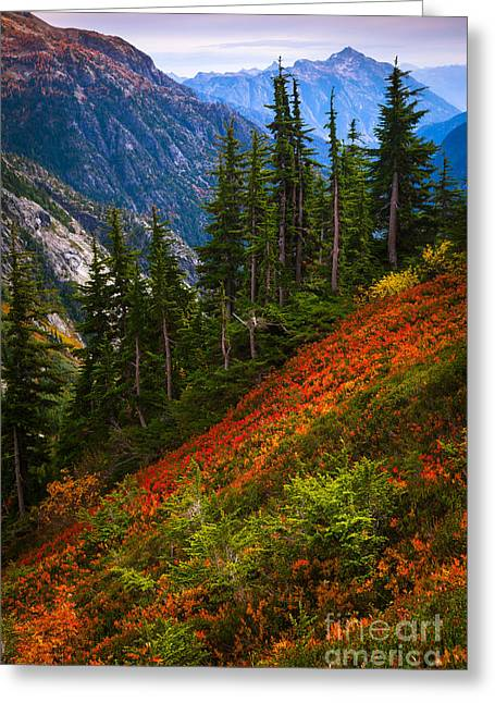 Conifer Tree Greeting Cards - Sahale Arm Greeting Card by Inge Johnsson