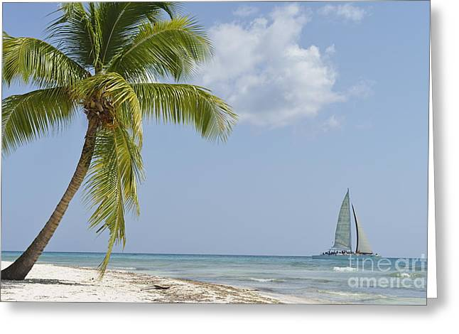 Sailboat passing by tropical beach Greeting Card by Sami Sarkis