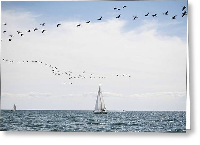 Sailboats In Water Greeting Cards - Sailboats Cruise The Waters Of Lake Greeting Card by James MacDonald
