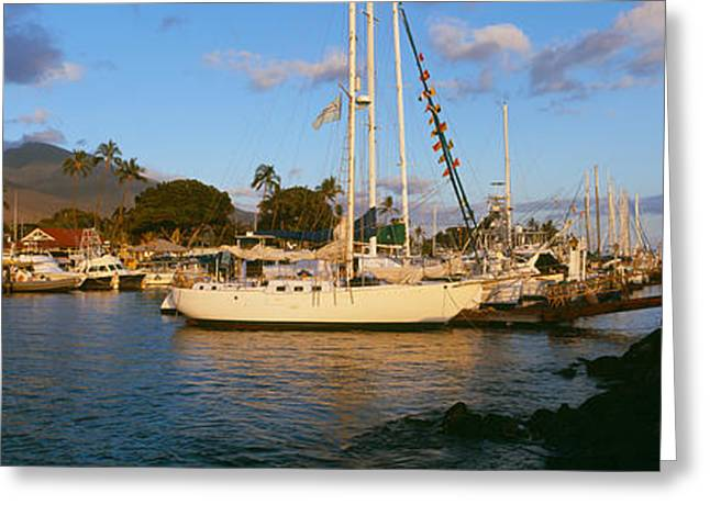 Sailboat Images Greeting Cards - Sailboats In The Bay, Lahaina Harbor Greeting Card by Panoramic Images