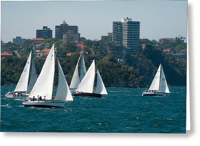 Sailboat Images Greeting Cards - Sailboats In The Sea With City Greeting Card by Panoramic Images