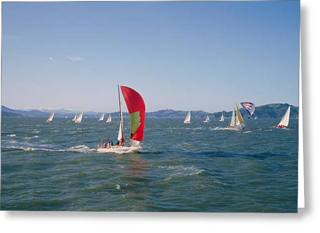 Blue Sailboat Greeting Cards - Sailboats In The Water, San Francisco Greeting Card by Panoramic Images