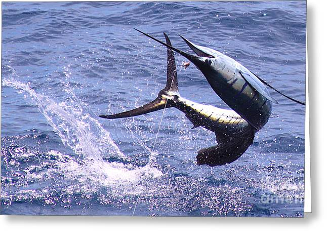 Black Bart Lures Greeting Cards - Sailfish Chaos Greeting Card by Carey Chen
