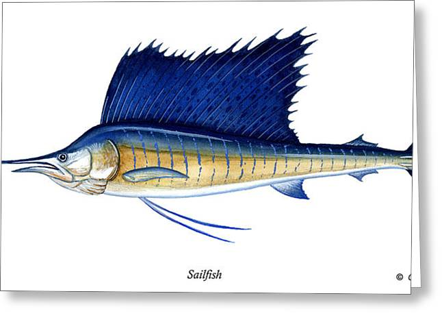 Strike Paintings Greeting Cards - Sailfish Greeting Card by Charles Harden