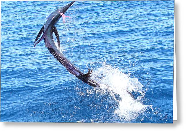 Sailfish Jump Greeting Card by Carey Chen