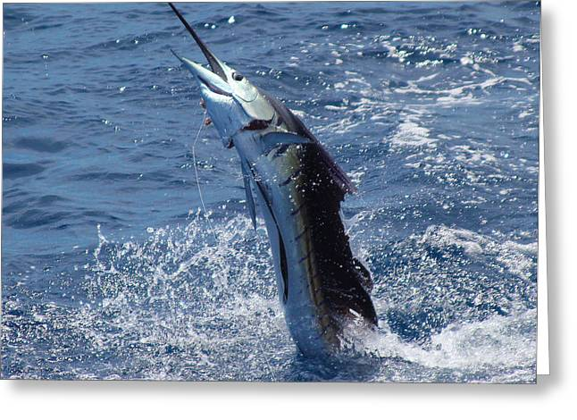 Black Bart Lures Greeting Cards - Sailfish release Greeting Card by Carey Chen
