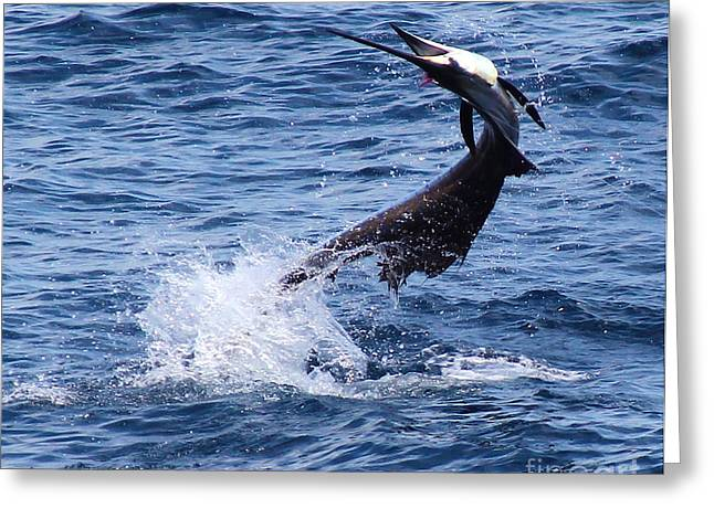 Sailfish Twist Greeting Card by Carey Chen
