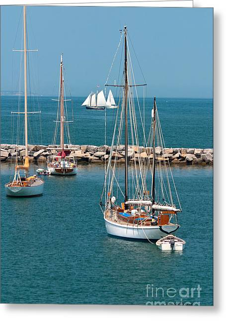 Vineyard Photograph Greeting Cards - Sailing Away Greeting Card by Michelle Wiarda