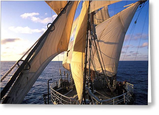 Sailing boats Kruzenshtern Greeting Card by Anonymous