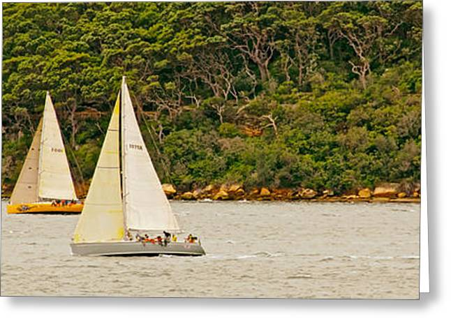 Sailboat Photos Greeting Cards - Sailing by Garden Island Australia Greeting Card by Mountain Dreams