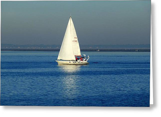 White Ferret Greeting Cards - Sailing By Greeting Card by Bishopston Fine Art