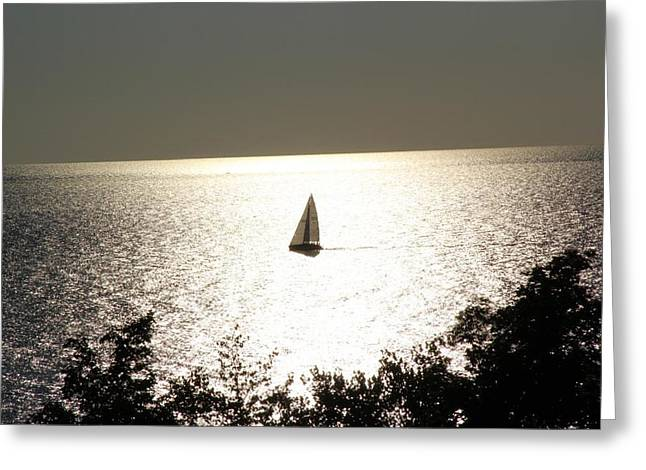 Beach Sand Birds Flying Clouds Sun Sky Trees Grass Building Day Beautiful Wings Flock Greeting Cards - Sailing Greeting Card by Paul Szakacs