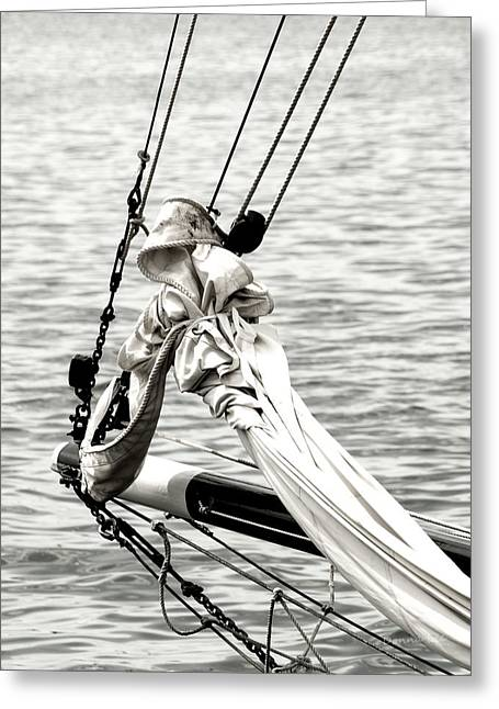 Sailing The Seven Seas Greeting Card by Donna Lee