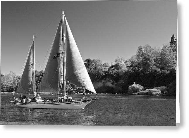 Sailboat Images Greeting Cards -  The Fearless on Lake Taupo Greeting Card by Venetia Featherstone-Witty