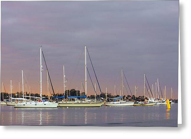Martin County Greeting Cards - Saint Lucie River Greeting Card by Patrick M Lynch
